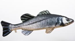 Sea Bass (Moøský vlk) - 70 cm polštáø
