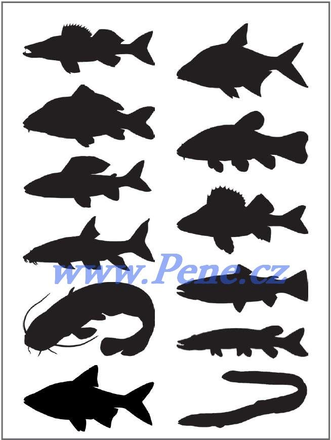 Rybáøské samolepky  sladkovodních ryb - zvìtšit obrázek